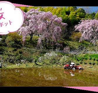 大雄町花咲く里山