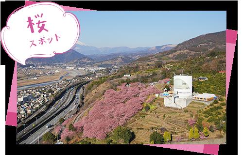 西平畑公園・松田山ハーブガーデン