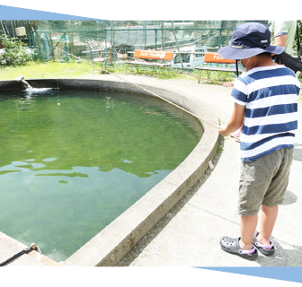 松田町寄清流マス釣り場