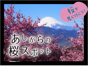 あしがらの桜スポット