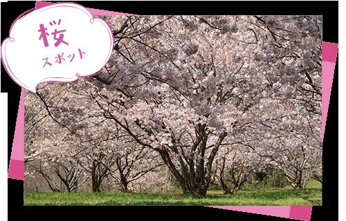 ビオトピア桜